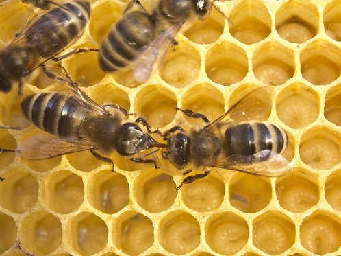 A Bees Life Part 1- Intro to Beekeeping