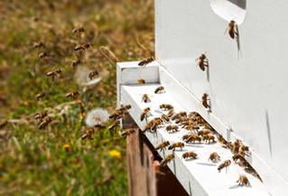 March Newsletter: Update on our hives that were vandalize, What is a NUC? Top Easter Basket Ideas.