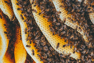 October Newsletter: Honeybee Democracy, Fall Farmers Markets Update, Video of Our New Apiary