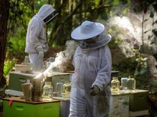 Saving Florida bee colonies, growing an industry/ Sarasota Herald Tribune Published: Sunday, August