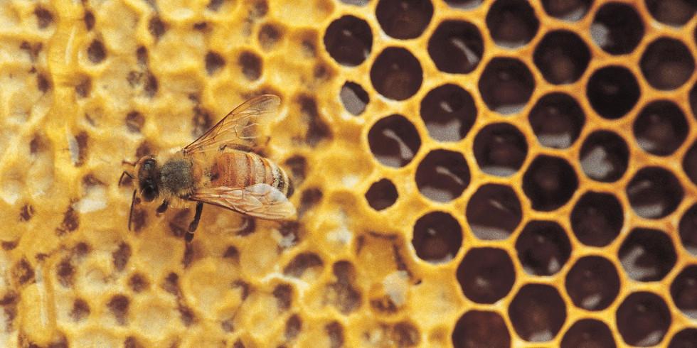 Sarasota Honey Company Tours