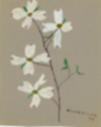 Art - Dogwood branch - 1959.jpg