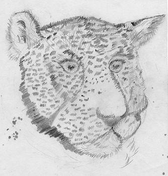Art - leopard - pencil.jpg