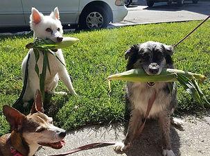 Corn Dogs.jpg