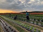 Vangie's Farm Field.jpg