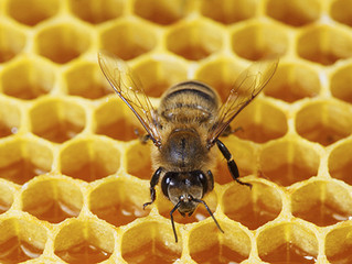 Sweet treatment: Honey a possible dry eye therapy?