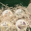 Thumbnail: Whipped Shea Butter Gift Set - Tropical
