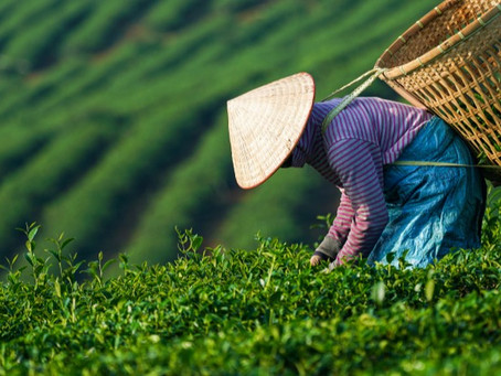 Mainstreaming Gender in Agriculture and Food Systems in Southeast Asia