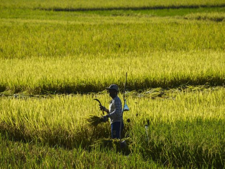 Tech's potential lies downstream for South-east Asia's small farms