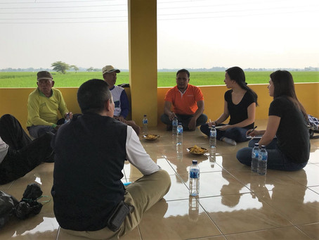 Understanding the potential of digital applications for rice farmers in Indonesia