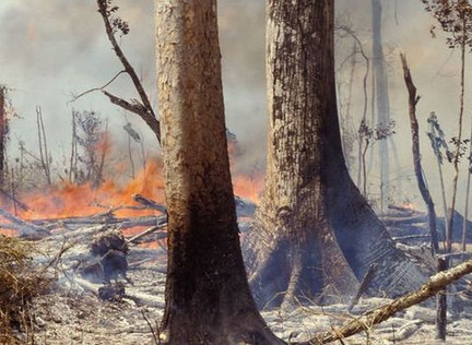 Amazon Brazil's Rainforest Burns