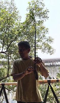 phuyai daeng holding seedling.JPG