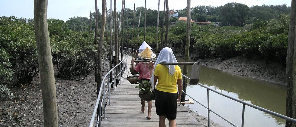 Co-managment of mangroves, China