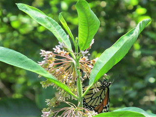 CLT wants you on the Pollinator Pathway