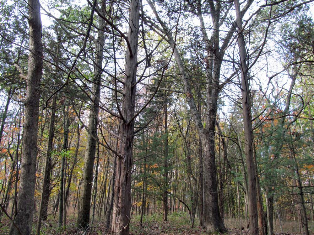 Fresh Meadows forest