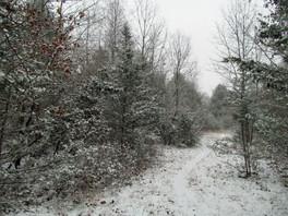 First Snow at Fresh Meadows