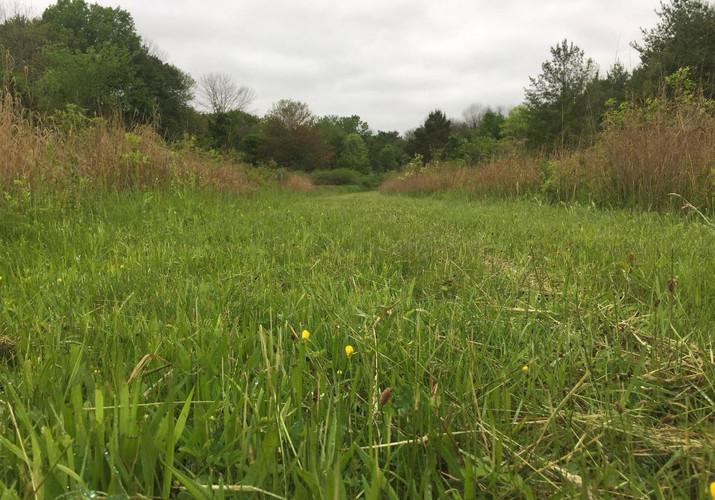 Fresh Meadows Fresh Cut