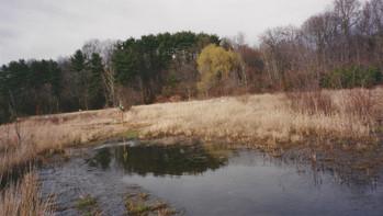 Fresh Meadows Vernal Pool