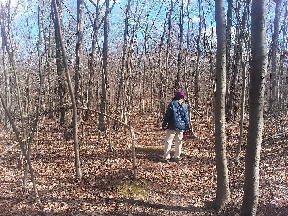 CLT steward looking at trees near trail.