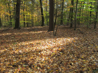 Rethinking the Fall Clean-Up Ritual