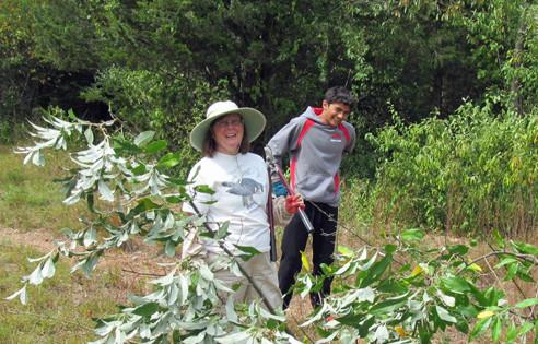Fresh Meadows stewardship