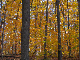 Last Peek at Peak Fall Leaves