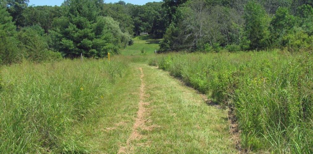 Fresh Meadows