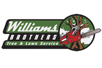 WilliamsBrotherstree.png