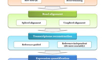 [New paper] A review to transcriptome sequencing