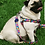 Thumbnail: Kit Wise Dog pretal + correa