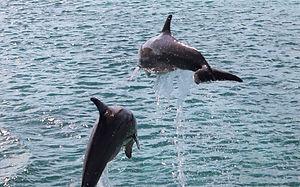 Dolfijnen1_edited.jpg