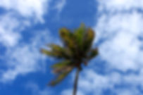 Palmbomen3.JPG