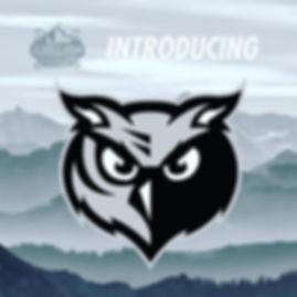 Barn Owls 1.JPG