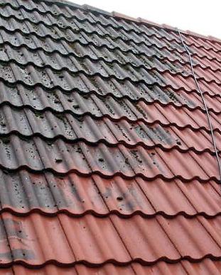 moss-on-roof-tiles.jpg