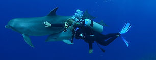 diving with dolphins.jpg
