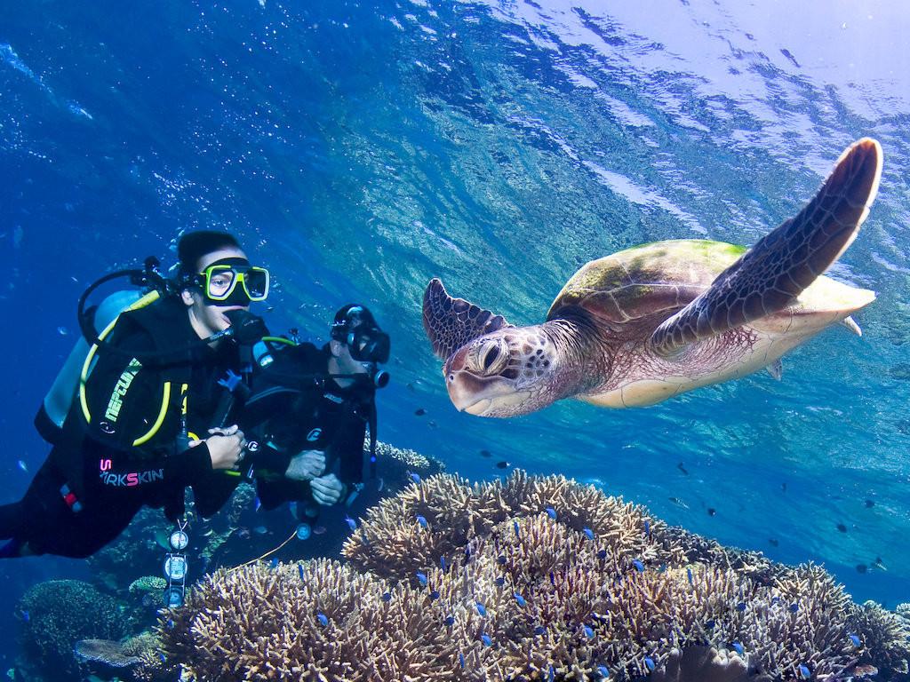 turtle.43.t.jpg