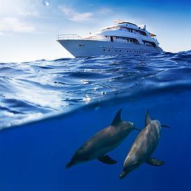 Dolphins House Tour Hurghada.jpg