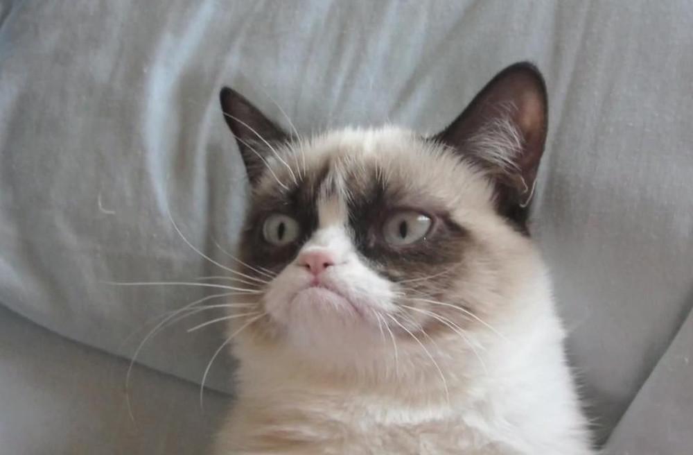 Grumpy-Cat2.jpg