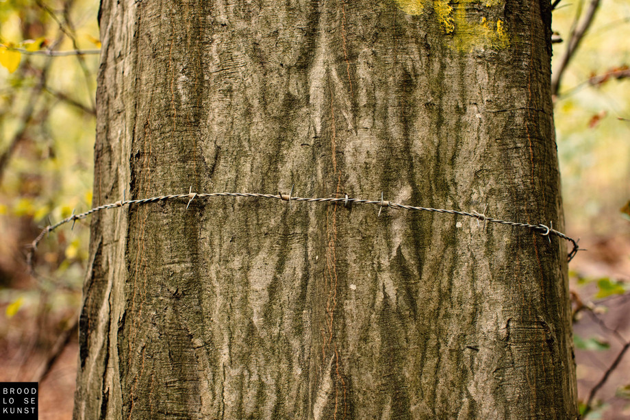 Barbed Tree