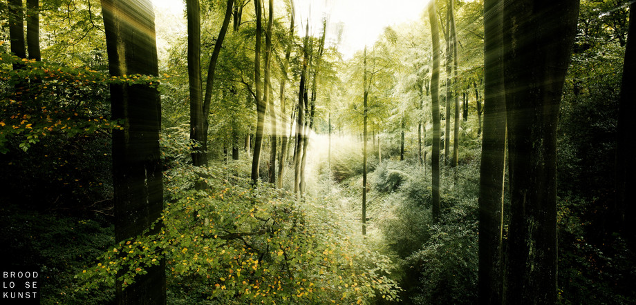 Tracing Forest