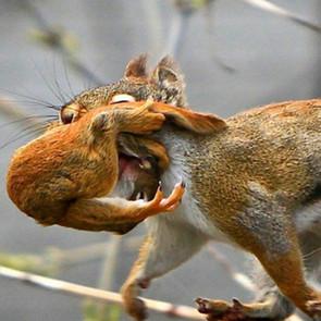 Squirrel Rescue Guide!