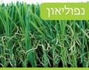 דשא סינטטי דגם נפוליאון