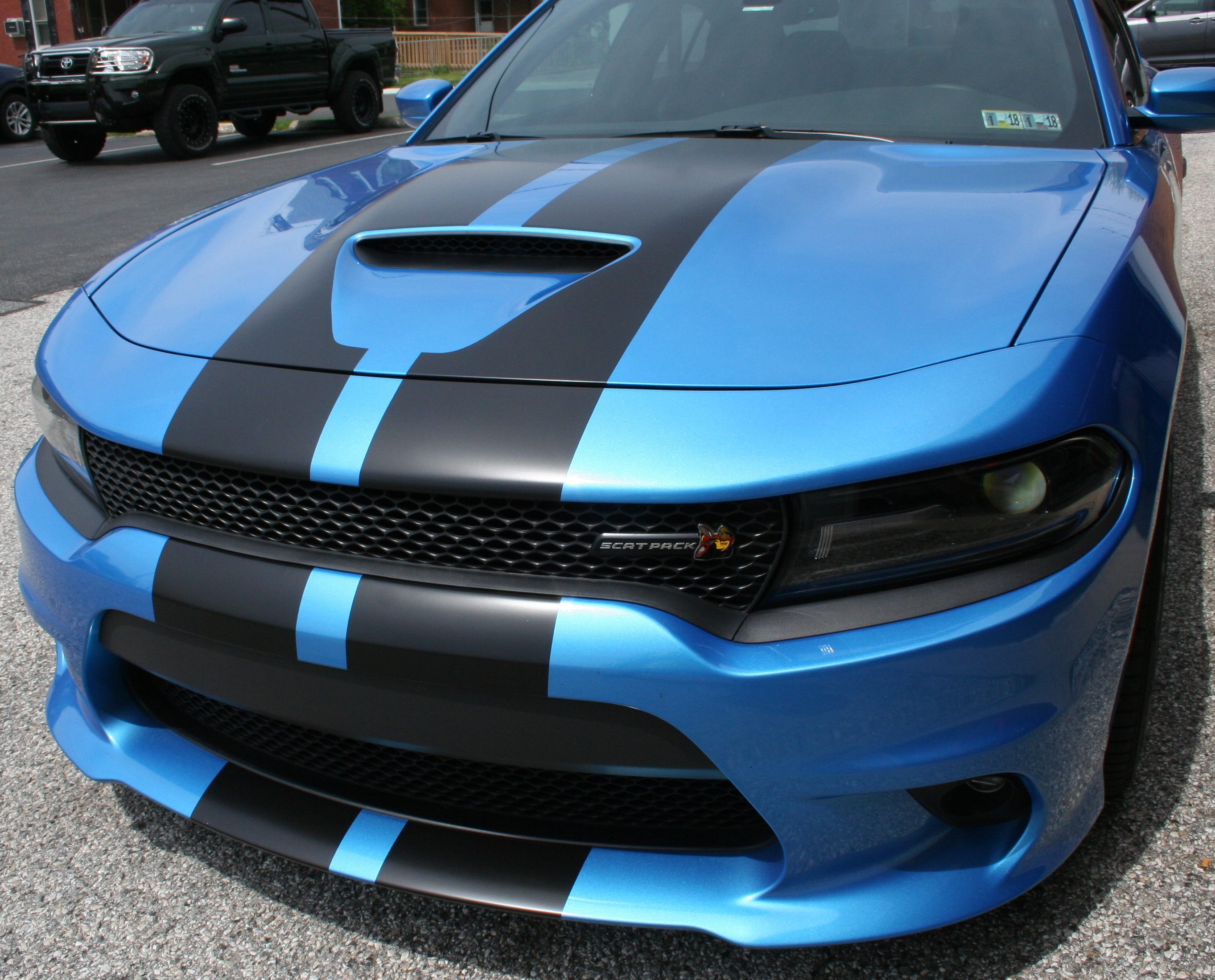 Hell Cat Stripes