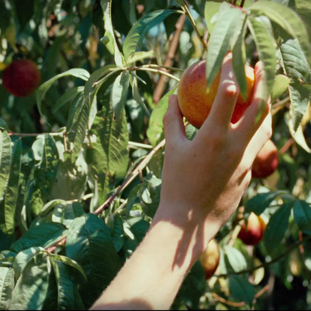 Movie Moments: CALL ME BY YOUR NAME