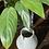 Thumbnail: Small White Rustic Vase
