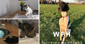 Working from home got you down? Check out our furry companions