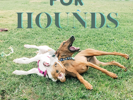 Homes for Hounds