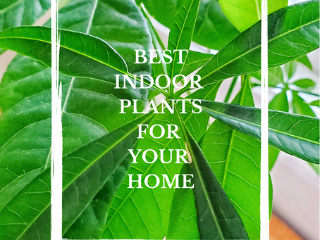 Plant Life = Best Life