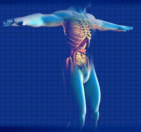 human-digestive-system-163714_1280_edited.jpg