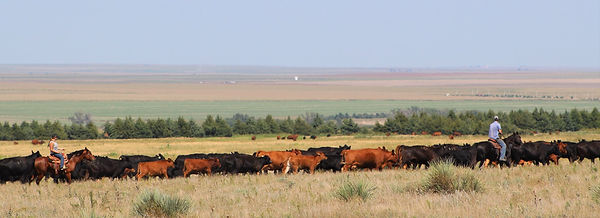 Canyon Pasture Pic- 3.jpg